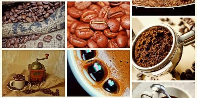 Coffee Production 101: The Magic from Seed to Cup