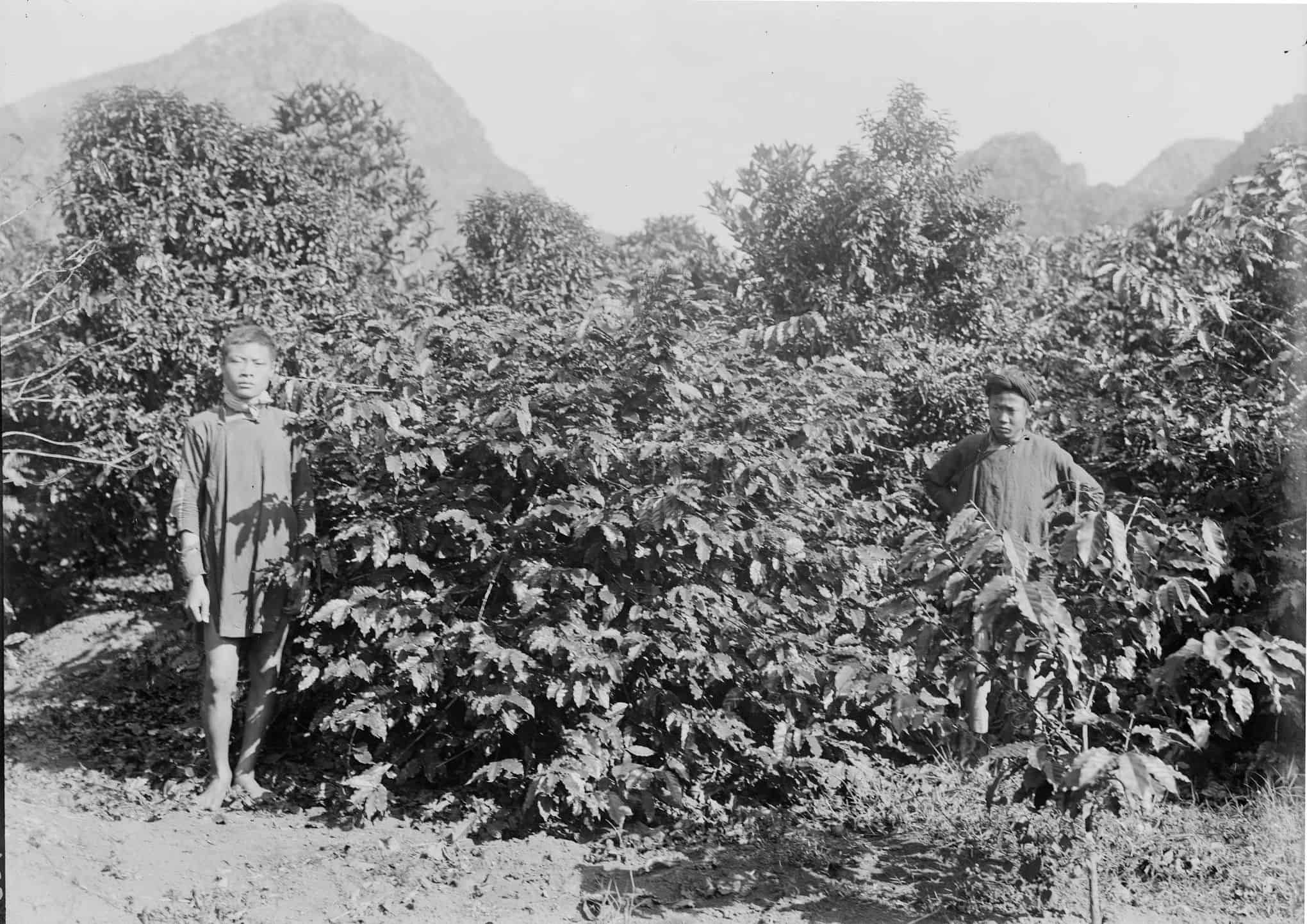 vietnam coffee history